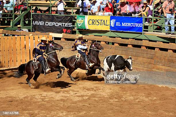 Chilean Rodeo