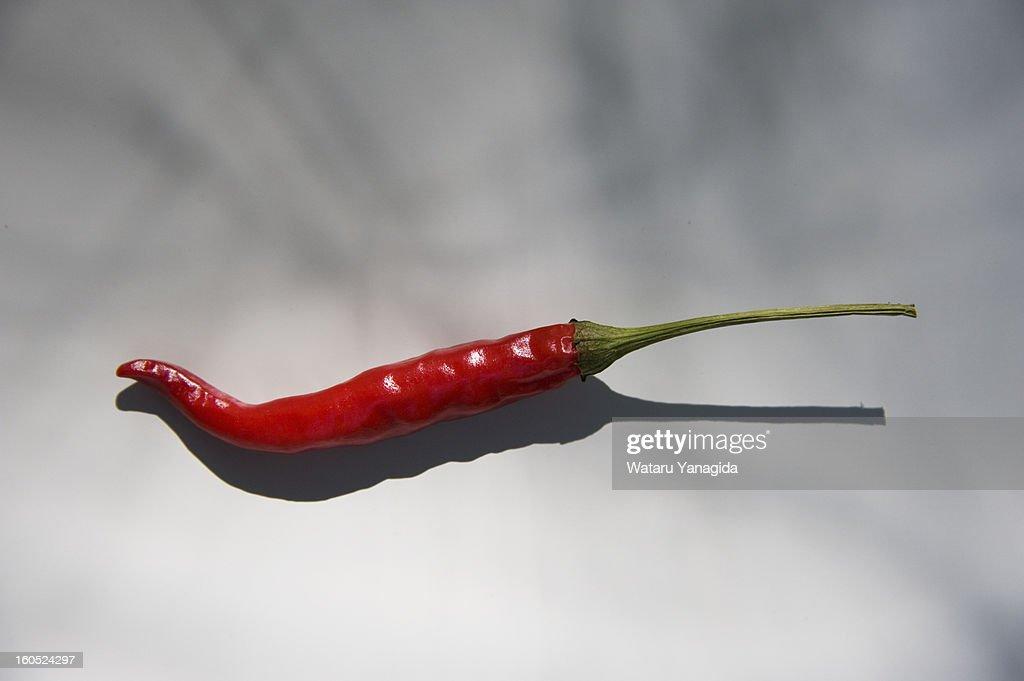 Chili pepper : Stock Photo