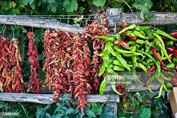 Chili peppers drying in Calabria, South of Italy, Italy, Europe