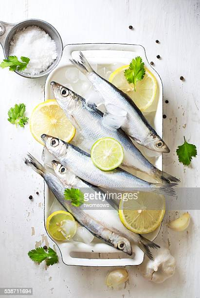 Chilled fresh uncooked sardines with herbs and lemon slice on white background.
