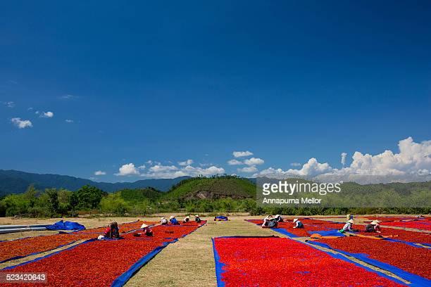 Chilli farmers in Phong Nha-Ke Bang National Park