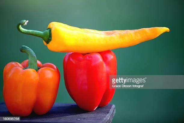 Chilli pepper in Swedish Summer