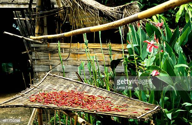 Chillies drying in the sun in a small village along the banks of the Mekong River in northern Laos Tropical Lao people eat super spicy hot food...
