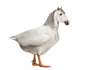 chimera with a horse and a body of a goose against white background
