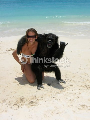 Chimp Gives Thumbs Up Hugging Girl On Beach Stock Photo ...