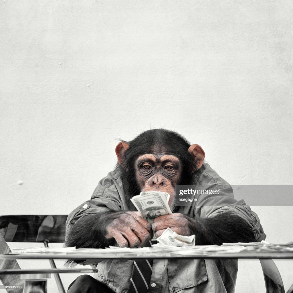 Chimp with cash