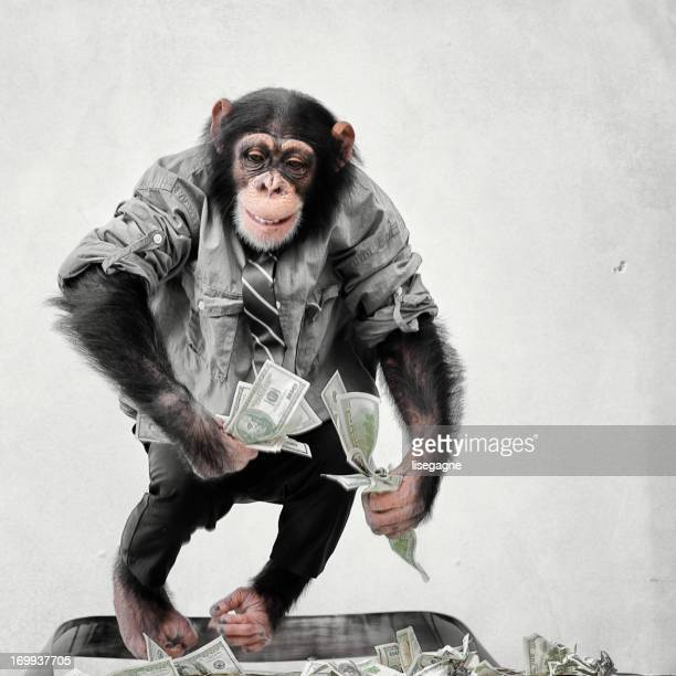 Chimp に現金