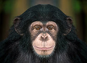 Patterns and details on the face of the chimpanzee.