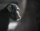 More monkeys: