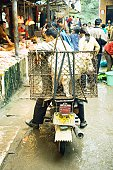 China, Guangdong province, man sitting on motor scooter in market, dog in cage on back of bike
