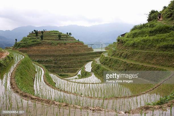 China, Guangxi Province, Longsheng, Jingkeng terraced ricefields, June