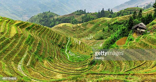 China Rice Terraces of Longsheng