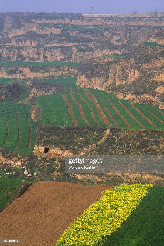 China Shaanxi Province Near Xian Wheat And Rapeseed Fields