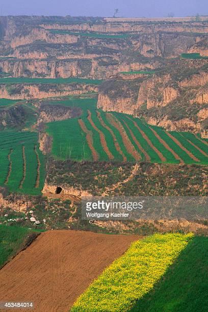 China Shaanxi Province Near Xian Wheat And Rapeseed Fields