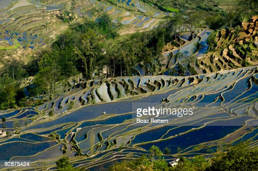 China, Yunnan Province, Yuanyang, terraced rice fi