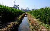 ChinaenvironmentpollutionactivistPROFILE by Bill Savadove A picture taken on September 14 2011 show a chemical factory beside a rice paddy near Taihu...