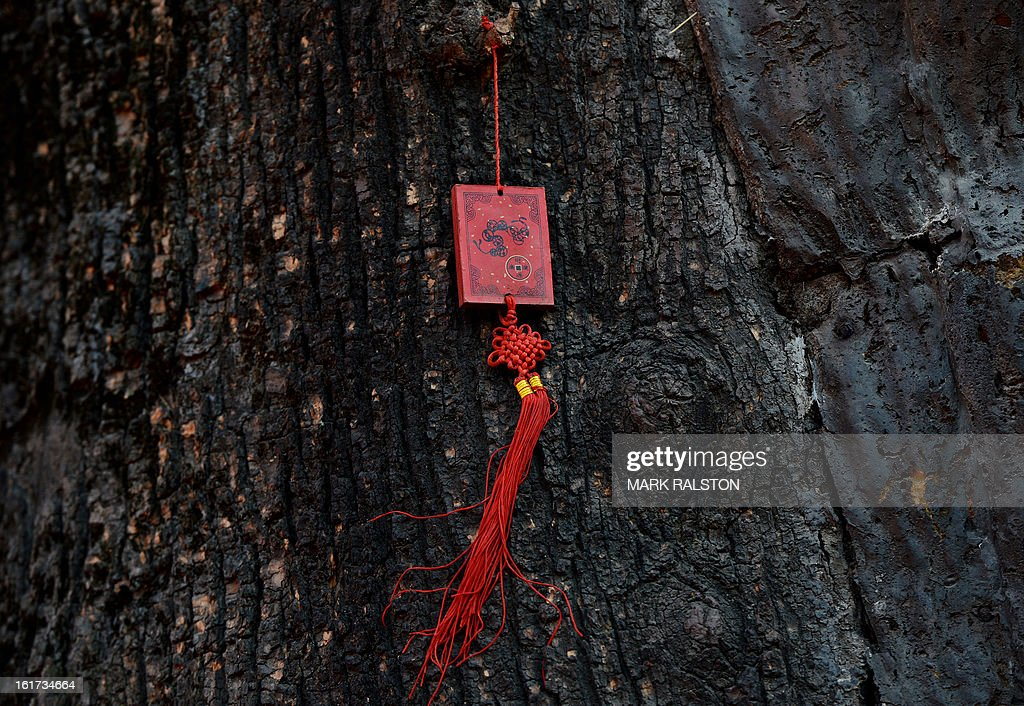 A Chinese Buddhist blessing tablet with wishes for the new year written on it attached to a sacred 600 year old tree at the Dongyue Temple in Beijing on February 15, 2013. China is welcoming the Year of the Snake and tradition proclaims that a snake in the house is a good sign because it means the family will not starve and children born in the Year of the Snake will be cunning, intelligent and wise. AFP PHOTO/Mark RALSTON