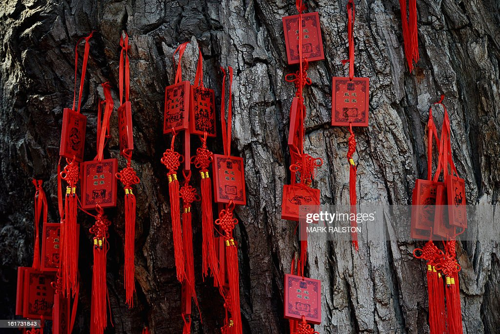 Chinese Buddhist blessing tablets with wishes for the new year written on them are attached to a sacred tree at the Dongyue Temple in Beijing on February 15, 2013. China is welcoming the Year of the Snake and tradition proclaims that a snake in the house is a good sign because it means the family will not starve and children born in the Year of the Snake will be cunning, intelligent and wise. AFP PHOTO/Mark RALSTON
