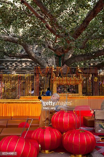 Chinese Buddhist monk is preparing a ceremony by the Bodhi tree inside the Mahabodhi Mahavihara temple of Bodh Gaya in Bihar India