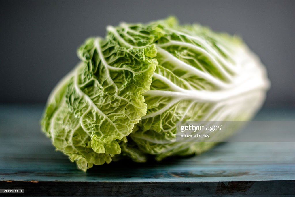 Chinese cabbage : Stock Photo