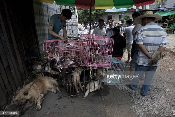 Chinese customers check out dogs in cages on sale at a market in Yulin in southern China's Guangxi province on June 21 2015 The city holds an annual...