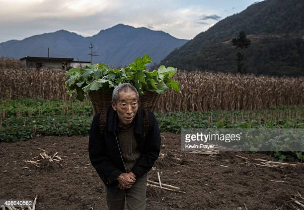 Chinese farmer carries greens from his field in the fertile hills below the base of the 7556 m Mount Gongga known in Tibetan as Minya Konka on...