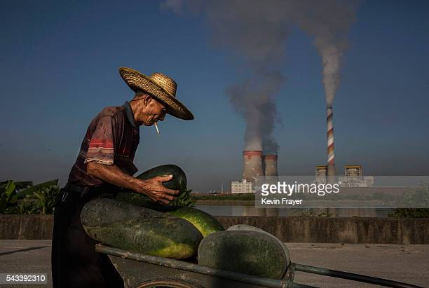 Chinese farmer loads his melons onto a cart on Shazai Island where the Sun YatSen UniversityMichigan University Joint Center of Vector Control for...