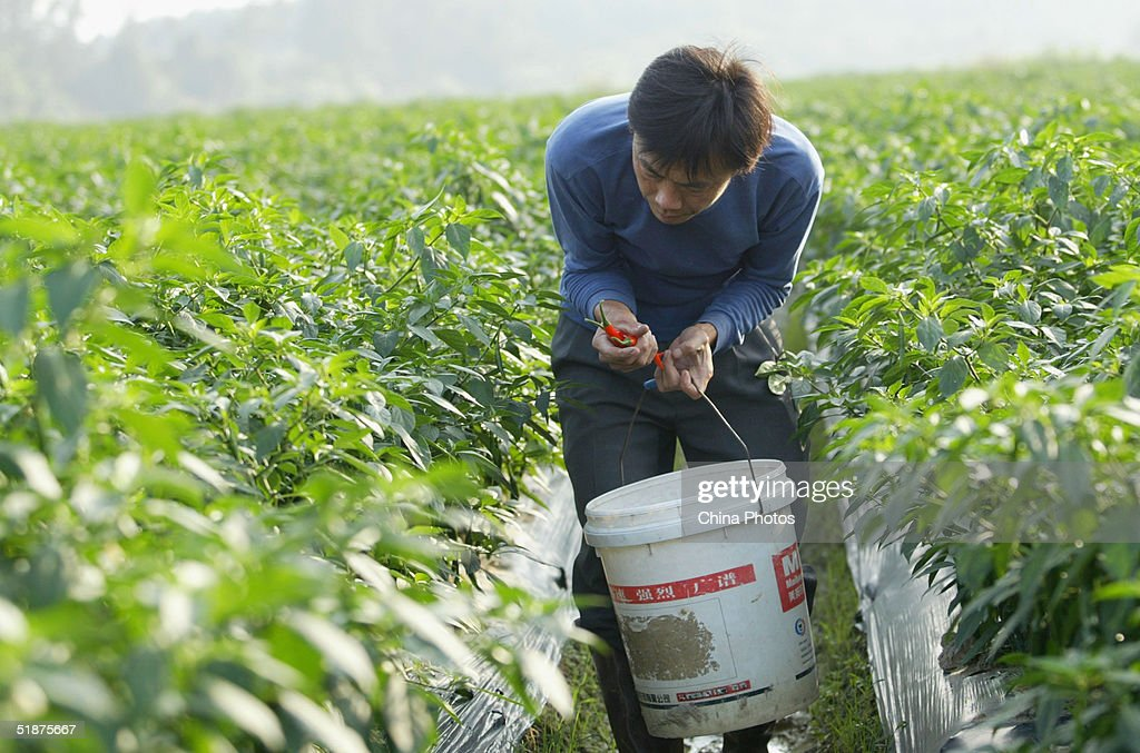 farmer city asian personals Mom is my personal sex slave helpless 1 year ago red tube mom,  asian sex slave cunt fucked with a plastic tube  farm (1059) farting (5083) fat (43409.