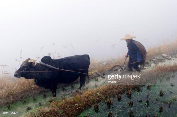 Chinesische Farmer