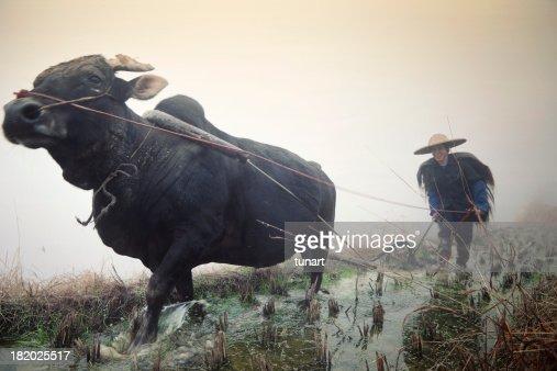 Chinese Farmer, Pingan, China