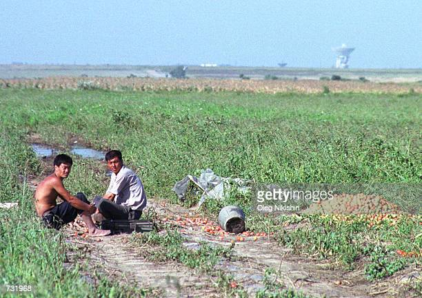 Chinese farmers rest in the field 150 km East of Vladivostok in the Russian Far East September 4 2000 Chinese farmers have to rent and cultivate land...