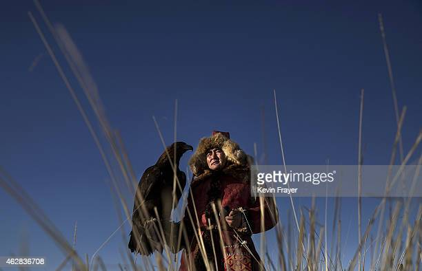 Chinese Kazakh eagle hunter Baurlas Qassim holds his eagle before a local competition on January 29 2015 in the mountains of Qinghe County Xinjiang...
