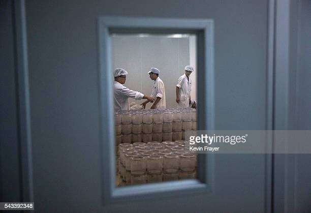 Chinese lab technicians organize containers of adult mosquitos to be released in the Mass Production Facility in the lab at the Sun YatSen...