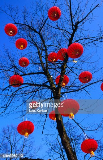 Chinese lanterns hanging from trees in Tivoli Gardens., Copenhagen, Copenhagen, Denmark, Europe