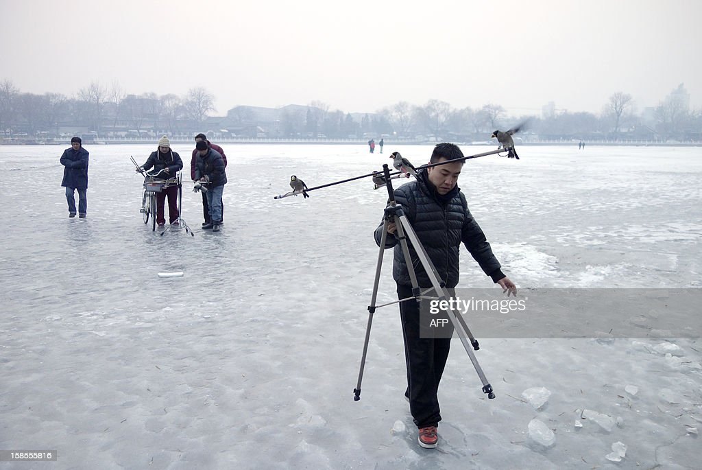 A Chinese man carries a tripod with his pet birds standing on it at a frozen lake in Beijing on December 19, 2012. China will allow transit passengers from 45 countries including the US, Canada and all members of the EU to spend up to 72 hours in Beijing without a visa from January 2013, city authorities said.