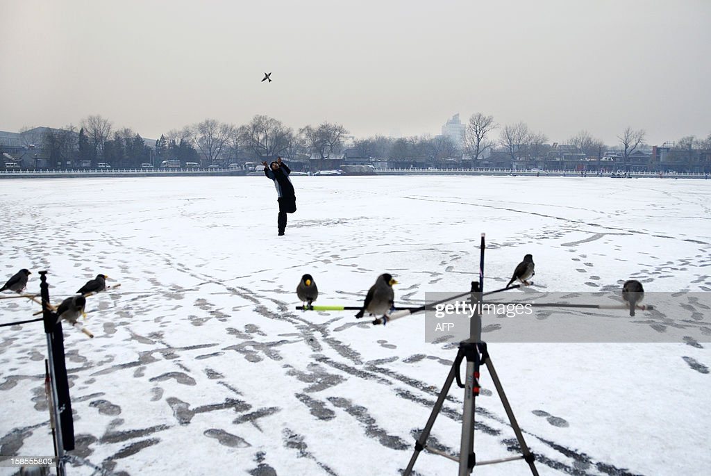 A Chinese man plays with his pet bird on a frozen lake in Beijing on December 19, 2012. China will allow transit passengers from 45 countries including the US, Canada and all members of the EU to spend up to 72 hours in Beijing without a visa from January 2013, city authorities said.