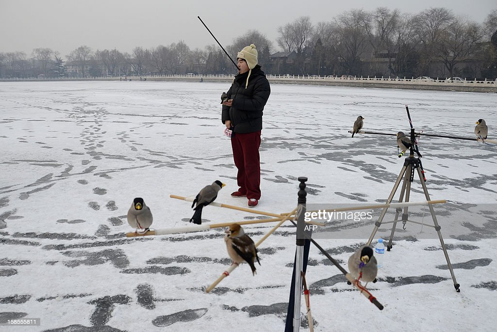A Chinese man plays with his pet bird on a frozen lake in Beijing on December 19, 2012. China will allow transit passengers from 45 countries including the US, Canada and all members of the EU to spend up to 72 hours in Beijing without a visa from January 2013, city authorities said. AFP PHOTO / WANG ZHAO