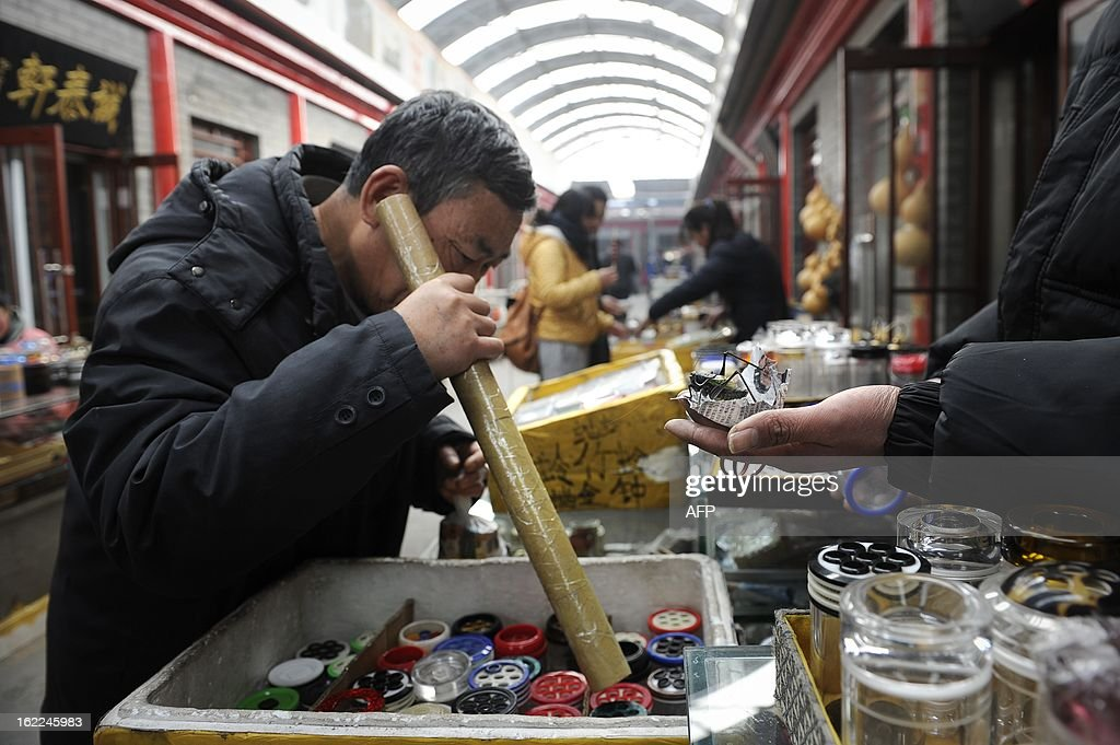 A Chinese man selects a Katydid, an insect also known as bush-crickets, with a paper tube by listening to its song at a market in Beijing on February 21, 2013. Raising Katydid is a tranditional hobby in the capital and dates back from Qing dynasty.