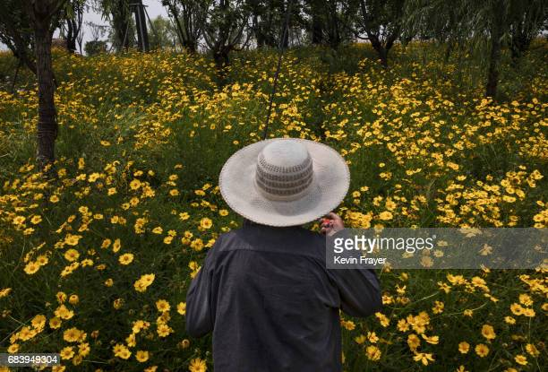 Chinese man walks home in rapeseed flowers after fishing near a new housing development on May 14 2017 in Wuhan Hubei province China