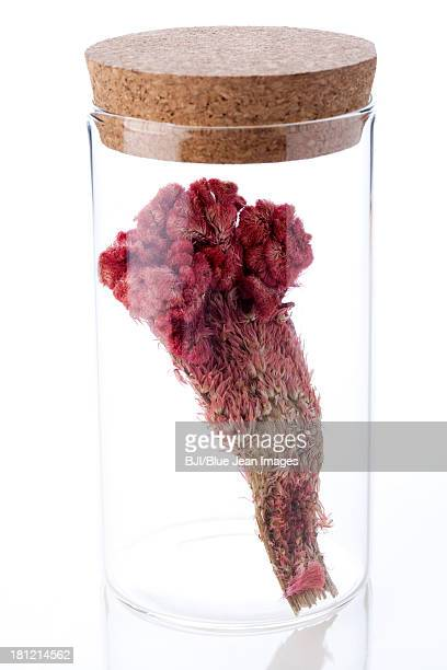 Chinese medicinal herb cockscomb in glass bottle
