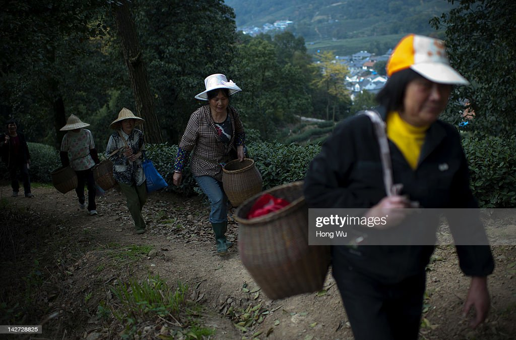 Chinese migrant workers on their way to pluck Longjing tea leaves at Meijiawu Village on March 29, 2012 in Hangzhou, China. Longjing is a green-tea, often called Dragon Well tea. The tea is typically picked by hand, and is of a high quality, earning the title of China Famous Tea. The Longjing tea begins to pluck before Chinese traditional Qingming Festival, the 15th day from the Spring Equinox or usually occurring around April 5. Many Chinese migrant workers from Jiangsu, Anhui, Jiangxi and other neighboring provices have been employed with 80 RMB yuan(US$12.68) to 120 RMB yuan(US$ 19.03) per day to pluck fresh Longjing tea leaves for villagers in many Longjing tea production villages in the outskirts of Hangzhou. The price of Longjing tea rose in recent years which aims to become to luxury goods. A high-end Longjing tea in Hangzhou sold for 50,000 RMB yuan(US$ 7930) half a kilo in 2012, the price rose 70 times in the last 12 years.