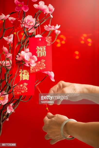 Chinese new year senior hand decorating plum blossoms with red packet.