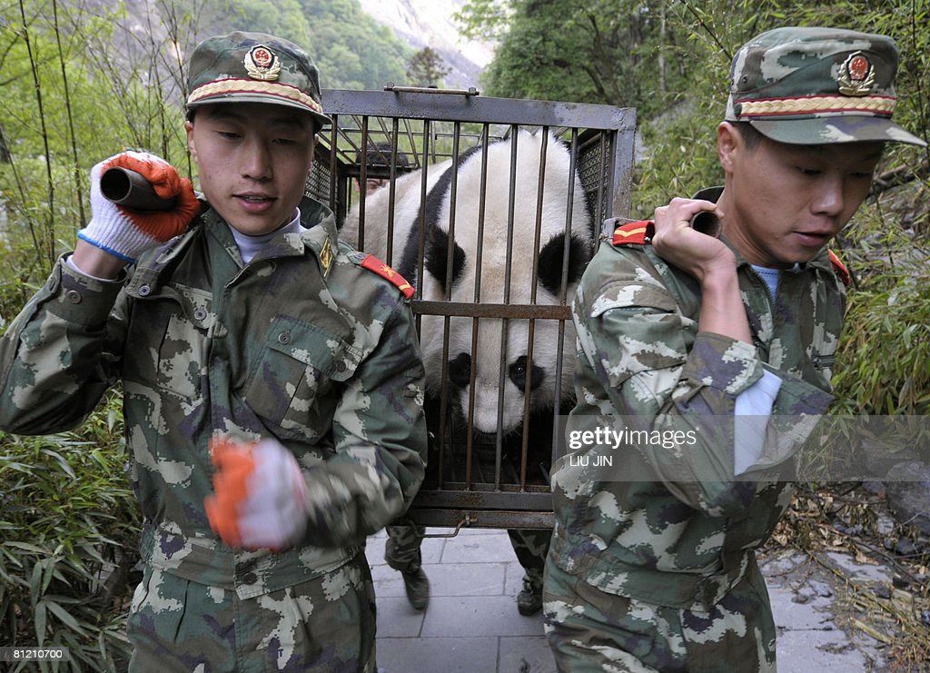 Chinese paramilitary soliders carry a giant panda during a transfer operation at China Conservation and Research Center for the Giant Panda in Wolong...