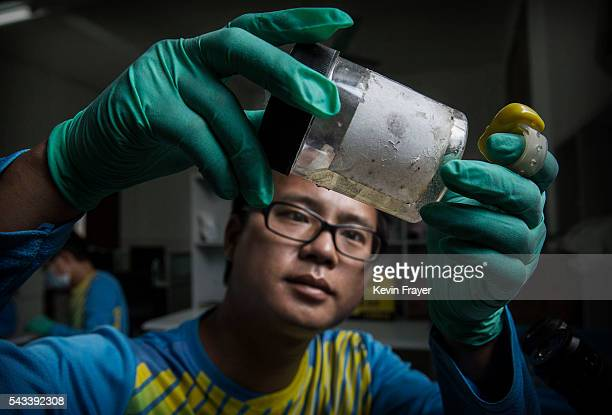 Chinese researcher Gan Renxian examines mosquito eggs caught in a trap in the village on Shazai Island where the Sun YatSen UniversityMichigan...