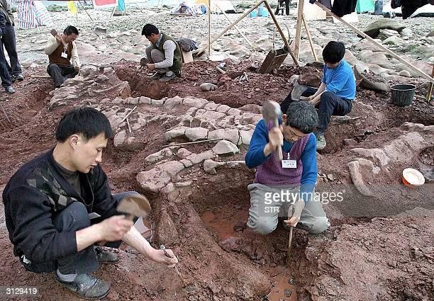 Chinese scientists excavate an unusually well preserved dinosaur fossil discovered at a site on the shore of the Jialing river near southwestern...