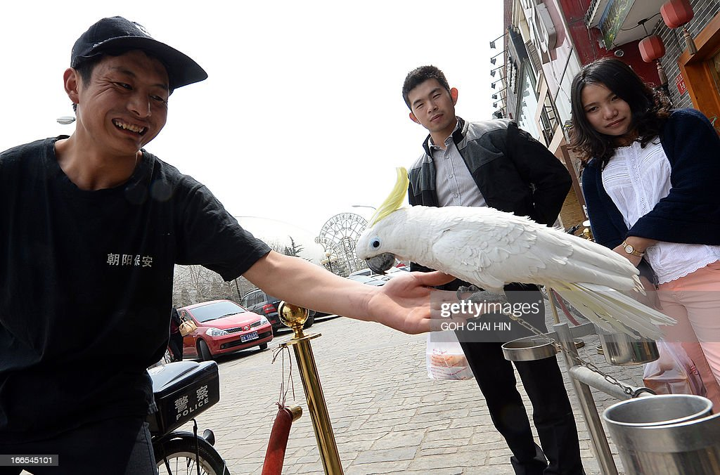 A Chinese security guard (L) plays with a parrot as passerbys watch outside a restaurant in Beijing on April 14, 2013, after health authorities reported the first human case of H7N9 bird flu as the disease spread to the capital city. Beijing, which has a population of more than 20 million, has already banned live poultry trading and pigeon releases.