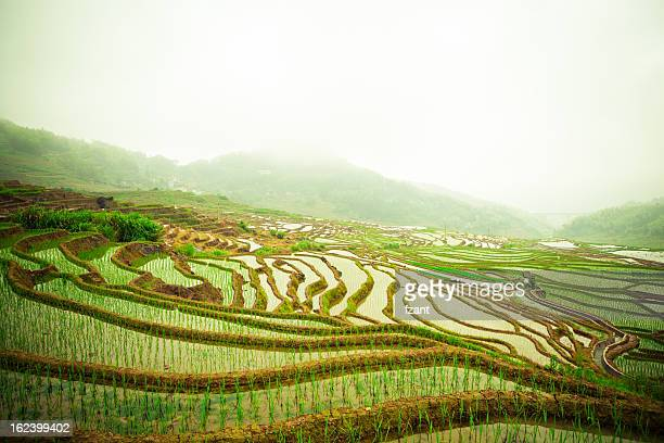 Chinese terraces