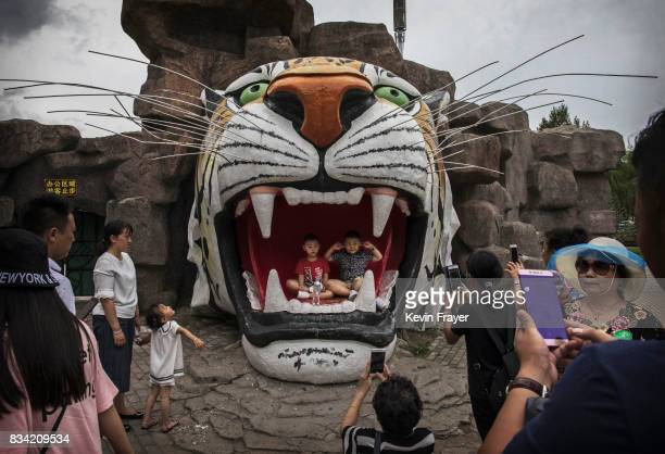 Chinese tourists pose for pictures in a monument of a tiger at the Heilongjiang Siberian Tiger Park on August 16 2017 in Harbin northern China The...