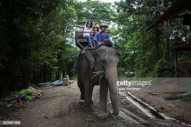 Chinese tourists ride elephants at the Mae Sa Elephant Camp on July 25 2014 in Mae Sa Thailand Thailand's government announced recently that visa...