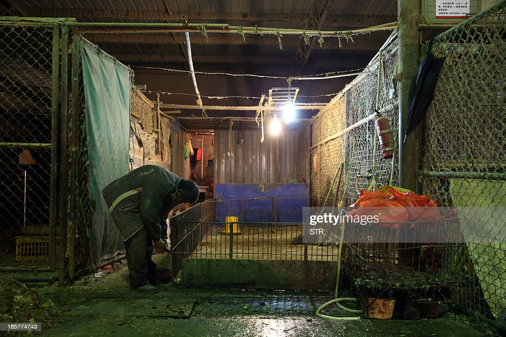 A Chinese vendor cleans an empty poultry cage at the Huhuai wholesale agricultural market in Shanghai on April 6, 2013, a day after a total of 20,536 chickens, ducks, geese and pigeons had been slaughtered. Shanghai ordered all live poultry markets in the city closed after culling more than 20,000 birds to curb the spread of the H7N9 flu virus, which has killed six people in China. CHINA OUT AFP PHOTO